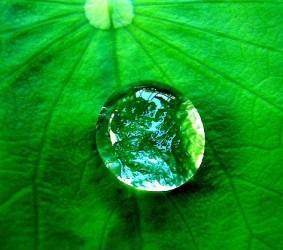 drop_rainforest_-283x250